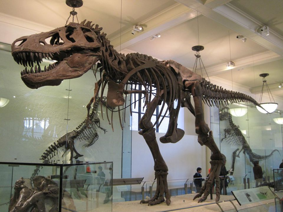 One of the highlights from the AMNH dinosaur collection