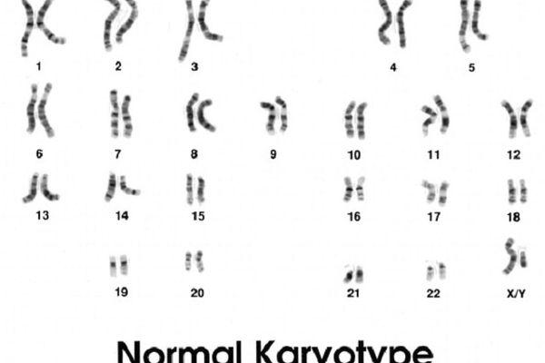 Male Karyotype