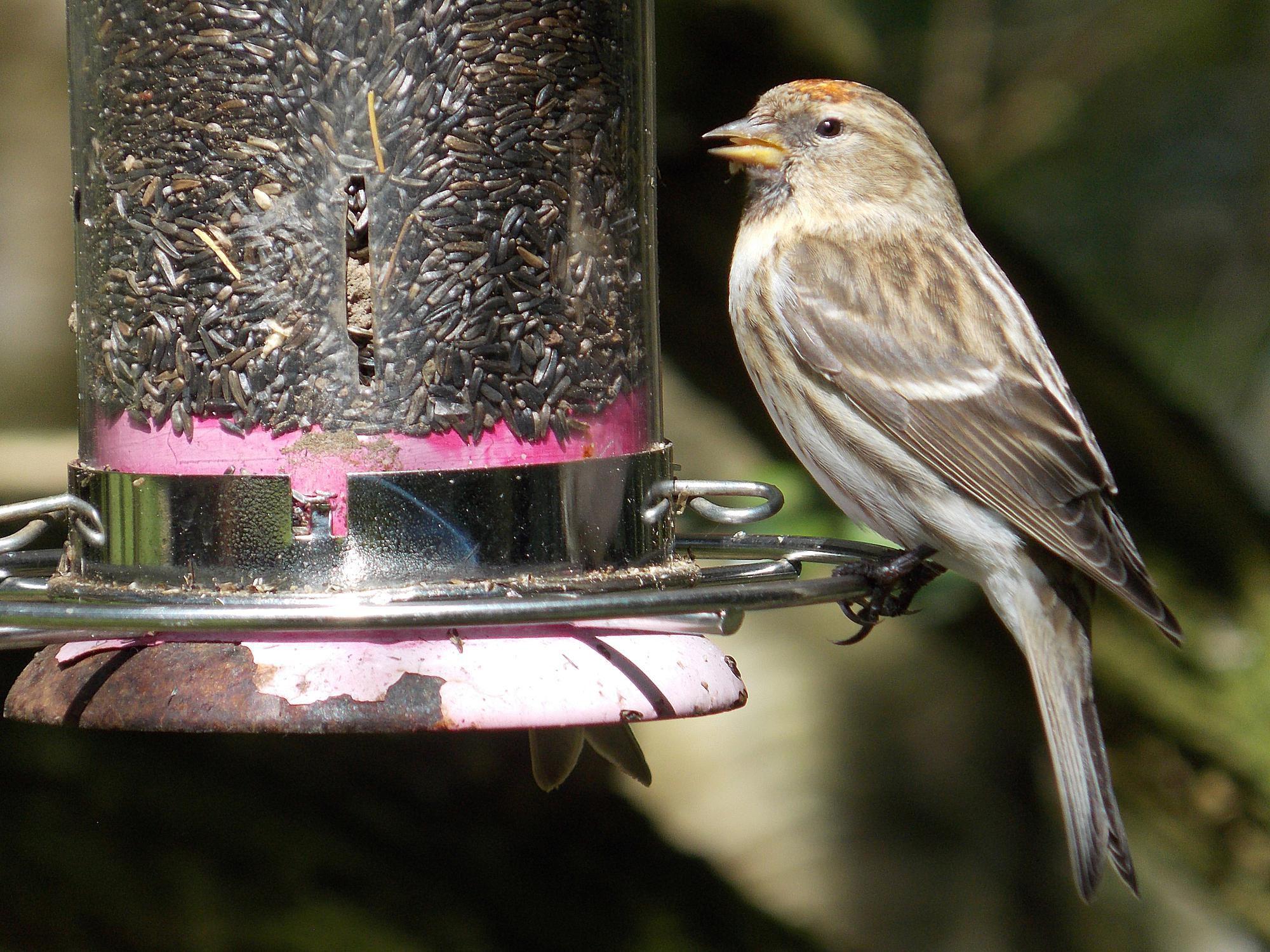bird feeder placement best tips