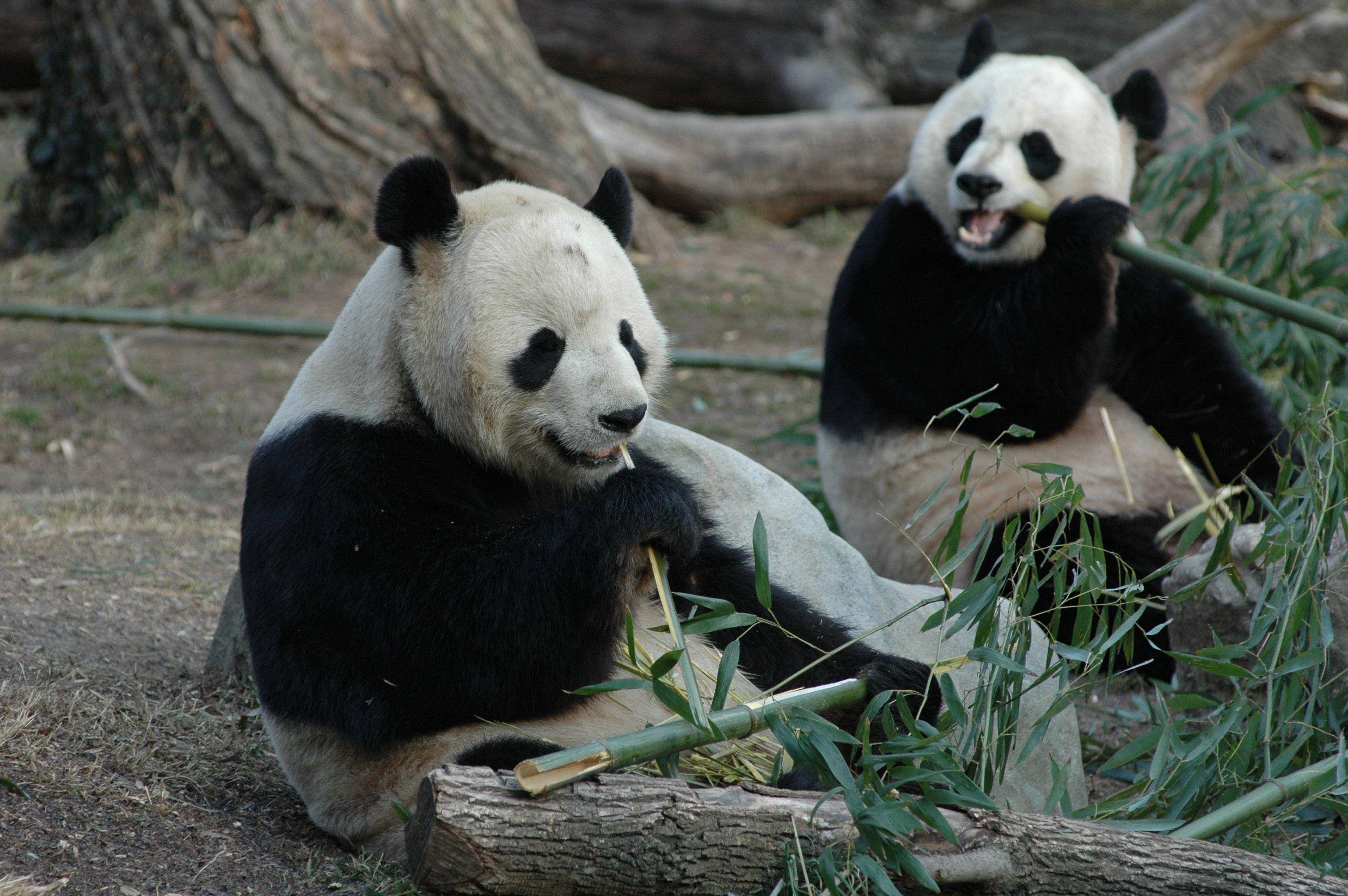 Hotels At Zoo Berlin