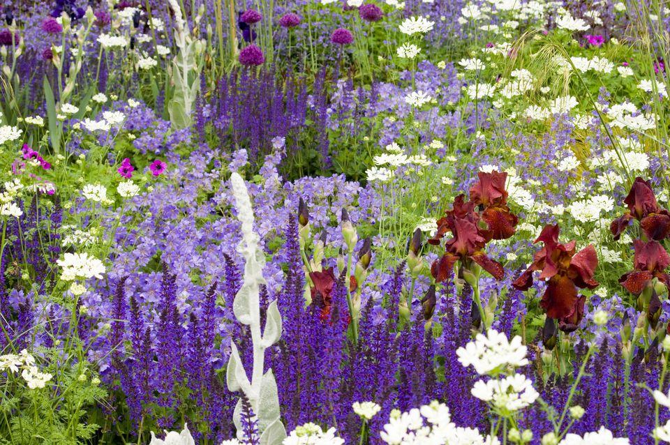 Chelsea Flower Show 2006, The Telegraph Garden