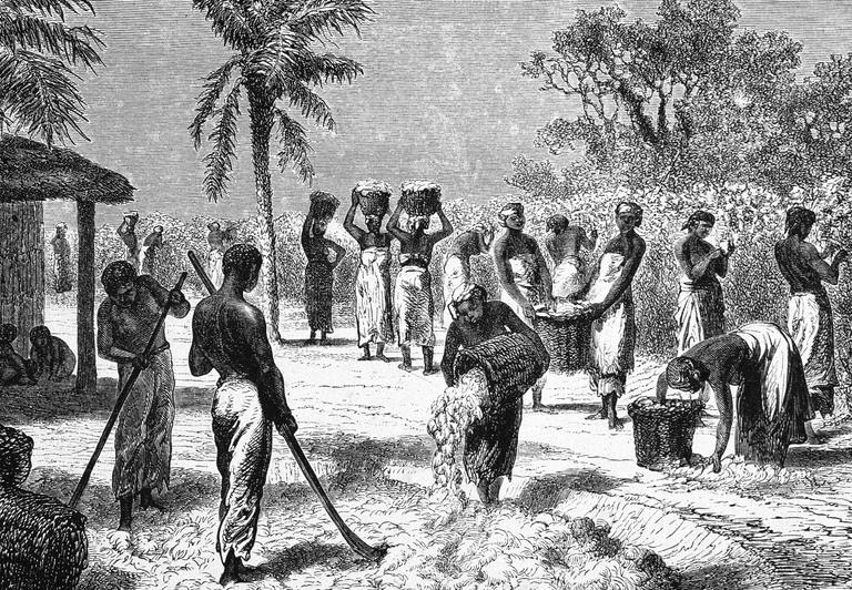 Illustration of slaves harvesting cotton on southern plantation.