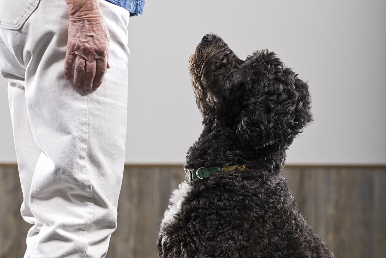 Dog training 101 how to completely train your dog train your dog to focus on you ccuart Gallery