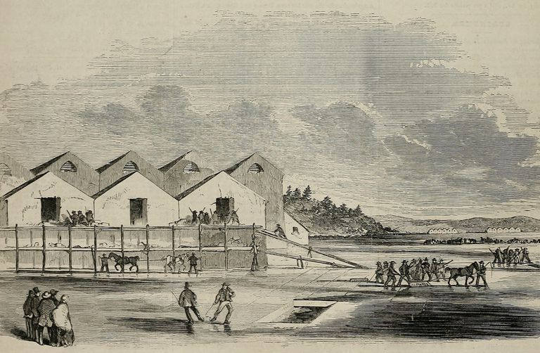 Illustration of ice harvesting in Cambridge, Massachusetts in 1855