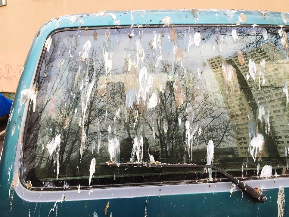 Bird Droppings on a Blue Car