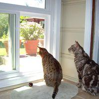 Pet friendly home remodels