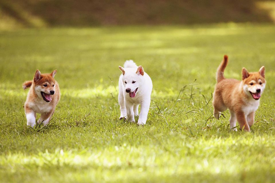 Puppies Playing In The Park, Outdoors