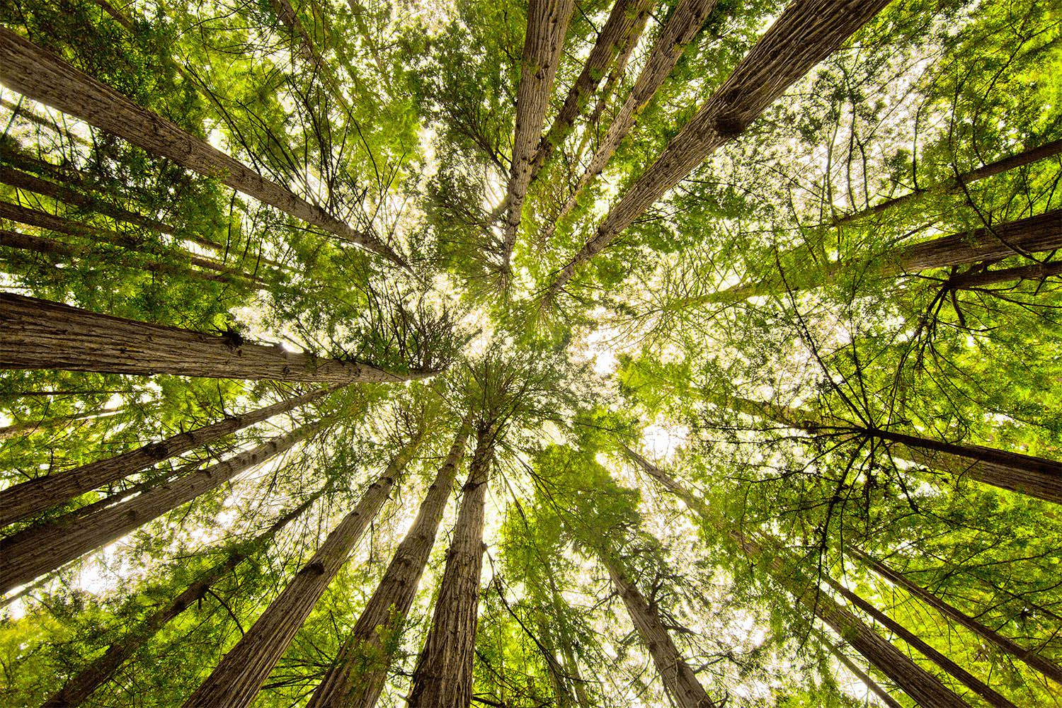 Muir Woods: How to See the Big Trees Near San Francisco