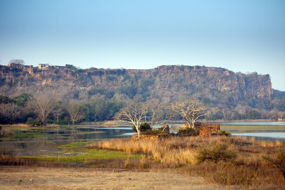 Padam Lake and Mosque, Ranthambhore, India