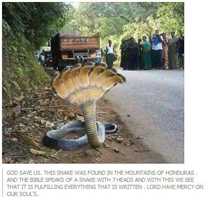 7-headed snake