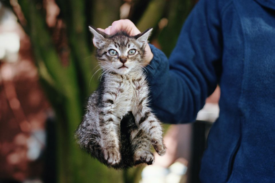 Learn How To Discourage Bad Behavior In Cats With Scruffing