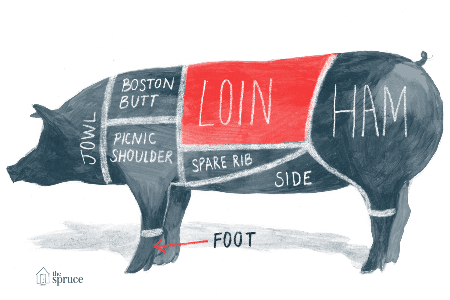 Cuts of pork pig diagram and pork chart pooptronica