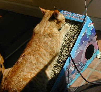 Jaspurr gives the Cosmic Alpine Scratcher a good workout