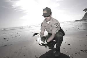 Fish and game warden career profile for Fish and game jobs