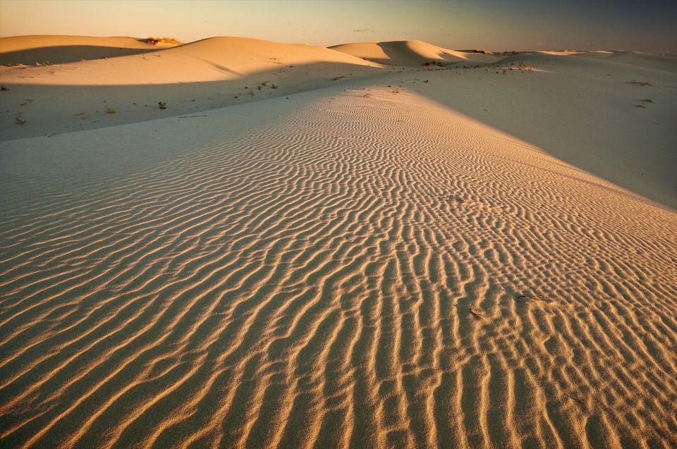 Monahans Sandhills, Chihuahuan Desert, Texas, USA