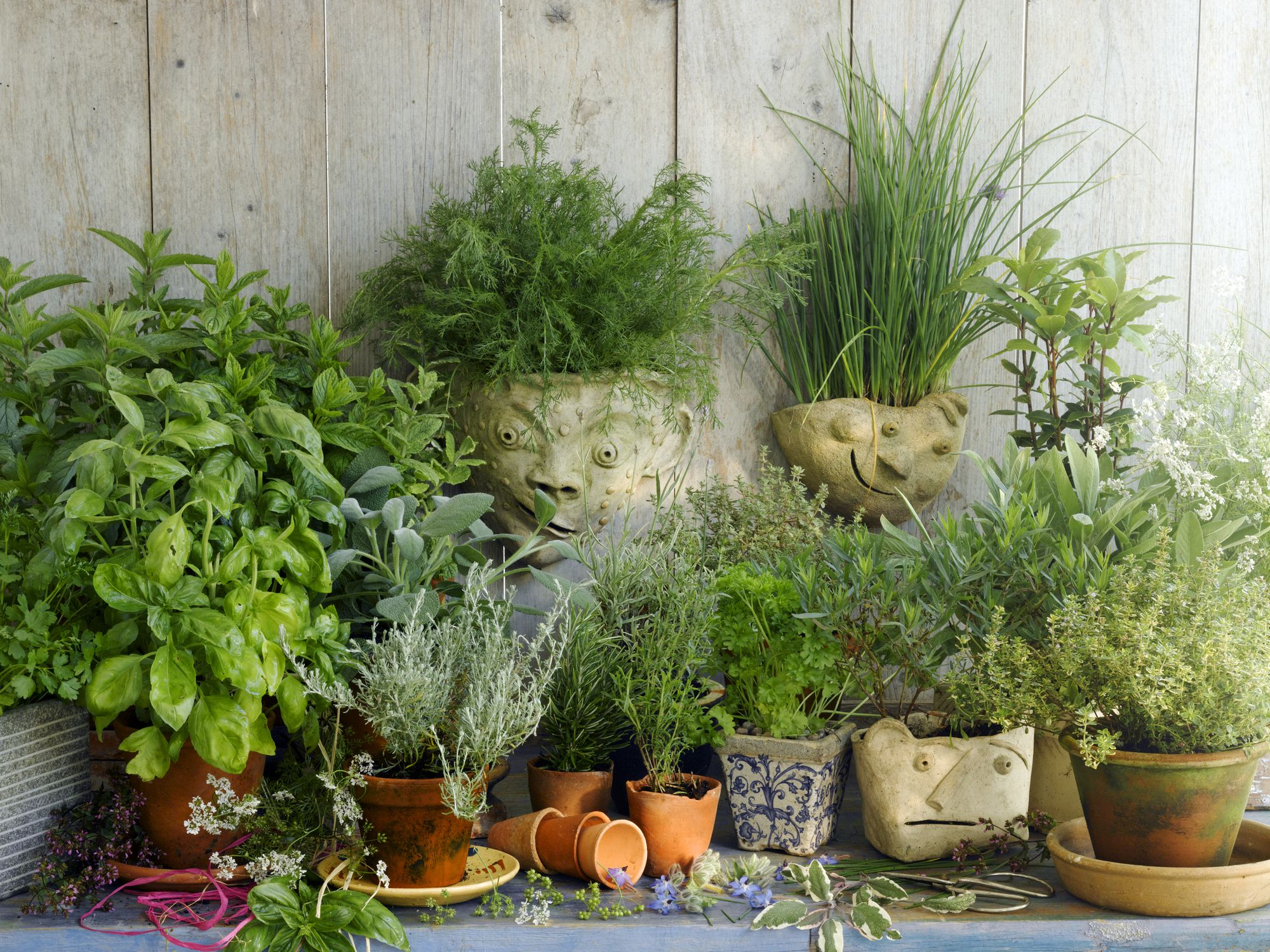 Planning A Garden For Growing Herbs