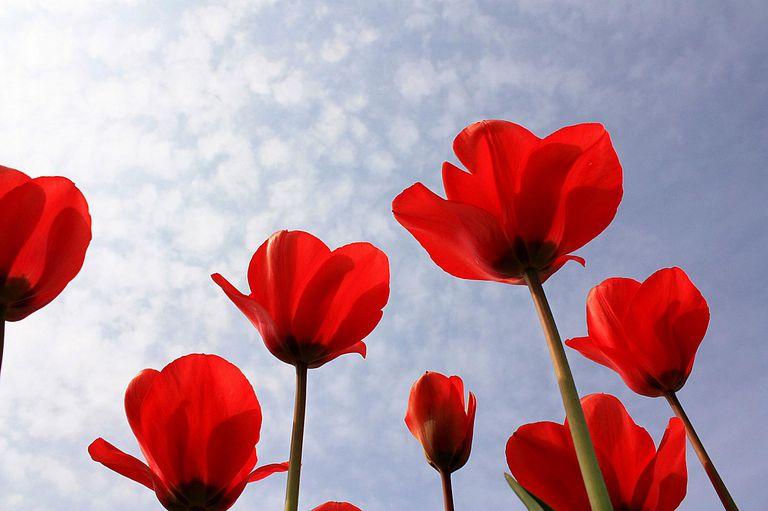 04.21.14_Memory-Verses-for-Spring.jpg