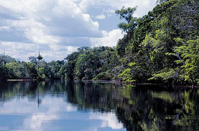 Which countries are within the african rainforest amazon rainforest sciox Image collections