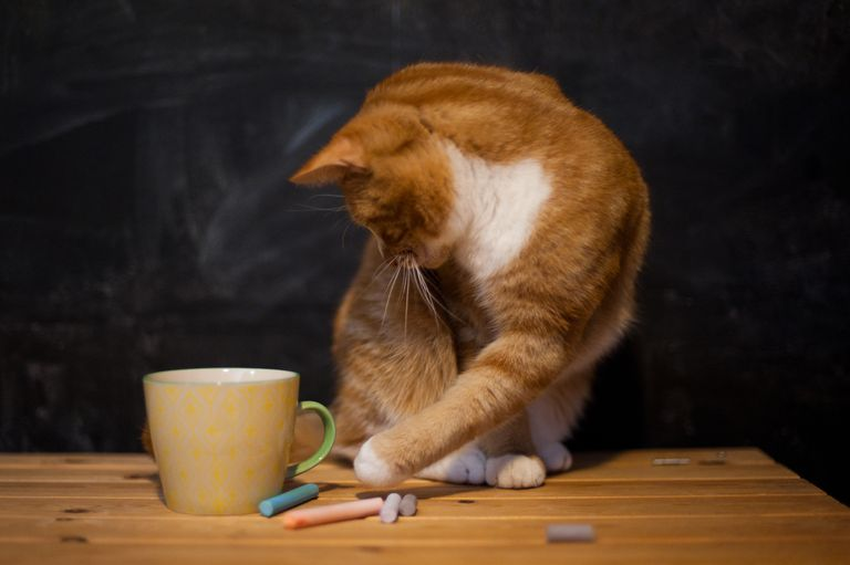 Ginger cat playing with chalk