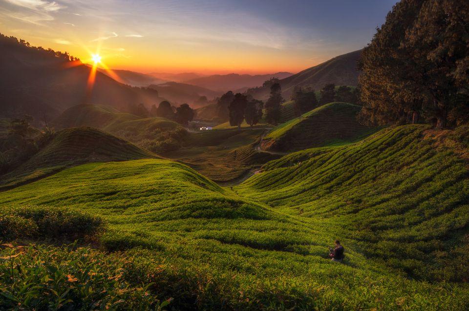 sunrise at tea plantation,Cameron highland,Malaysia Details
