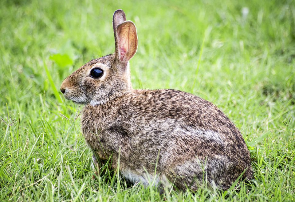 Can House Rabbits Live With Dogs