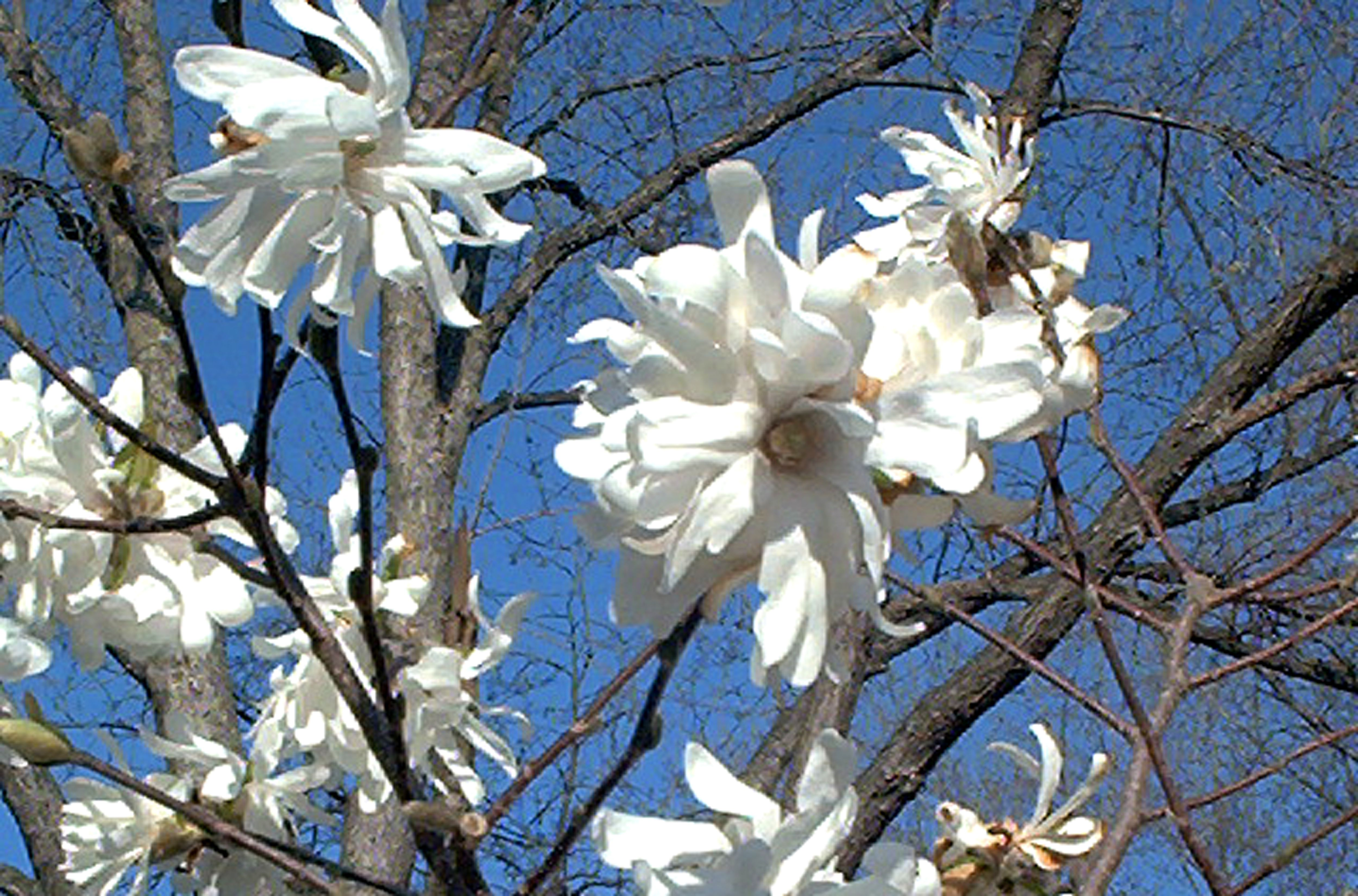 The best flowering trees for your landscape izmirmasajfo Images