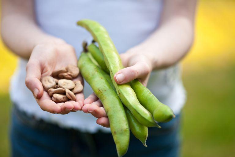 Beans-Tim-Platt.jpg