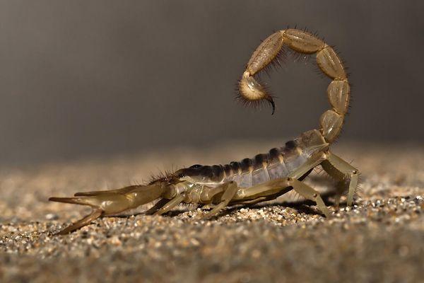 close-up of scorpion