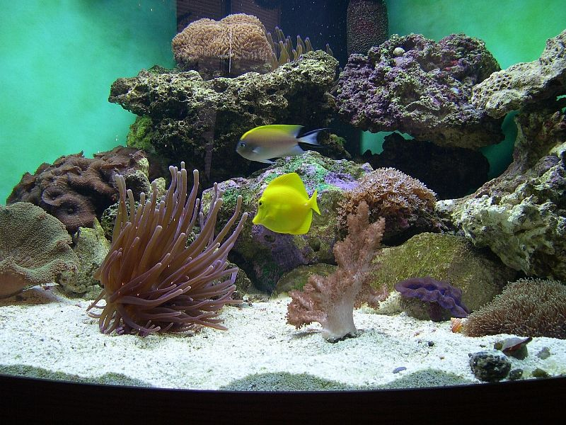 How to cure live rock in a new saltwater aquarium for Fish only saltwater tank