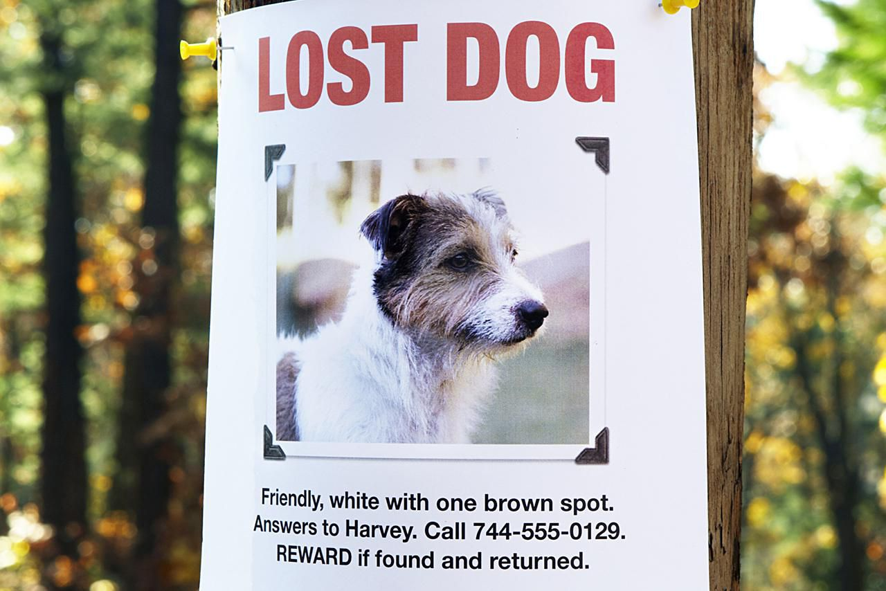 a half dozen tips on how to find a lost puppy