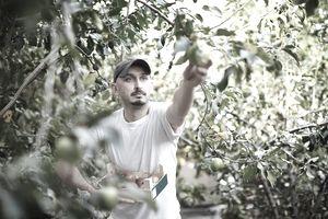 Farm worker harvesting fruit