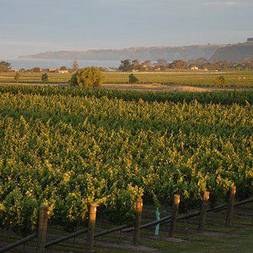 Hawkes Bay Vineyards