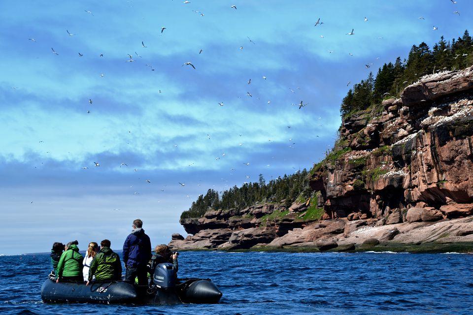 At Bonaventure Island with Adventure Canada