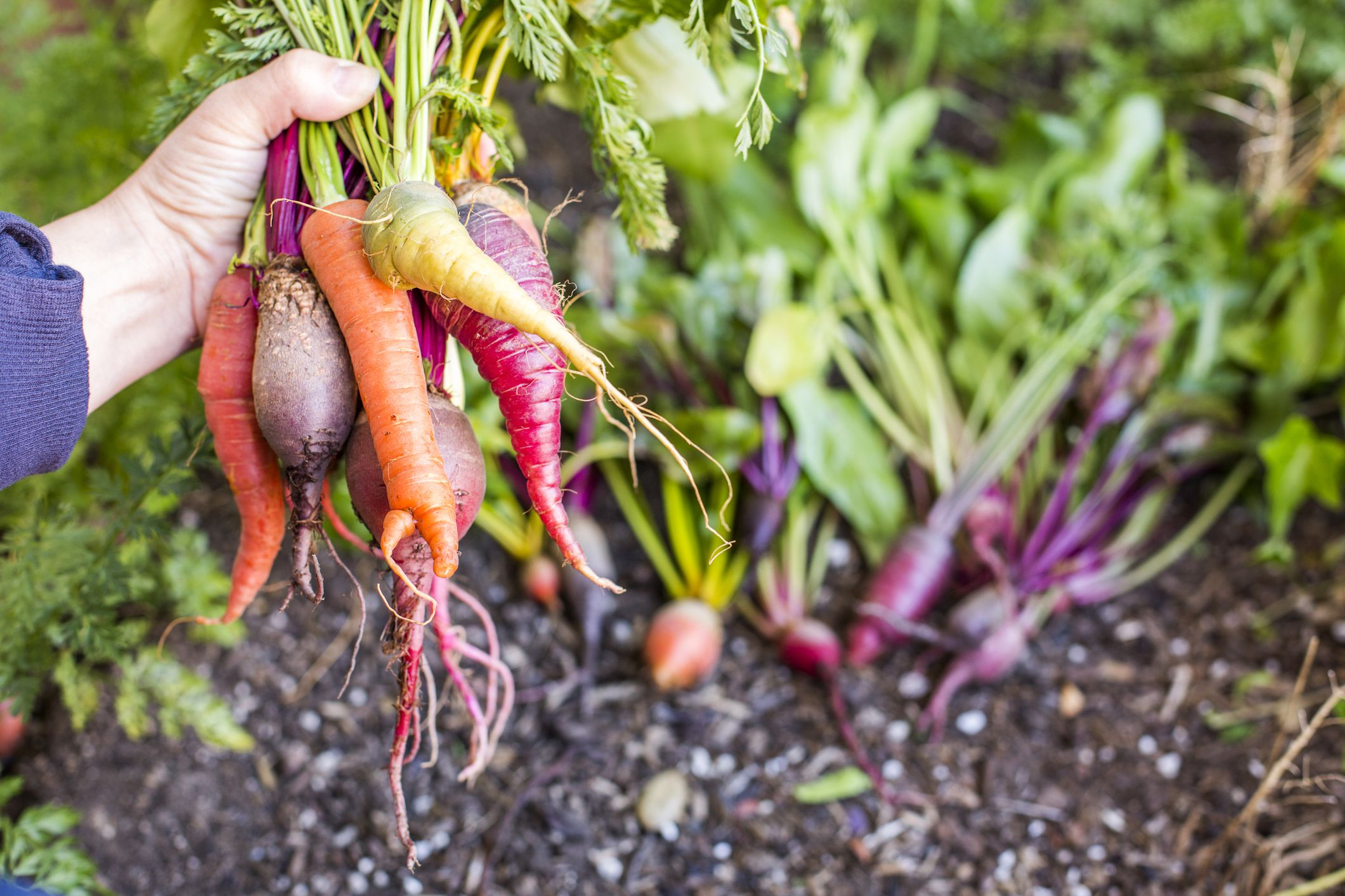 How To Store Root Vegetables So They Stay Fresh Longer