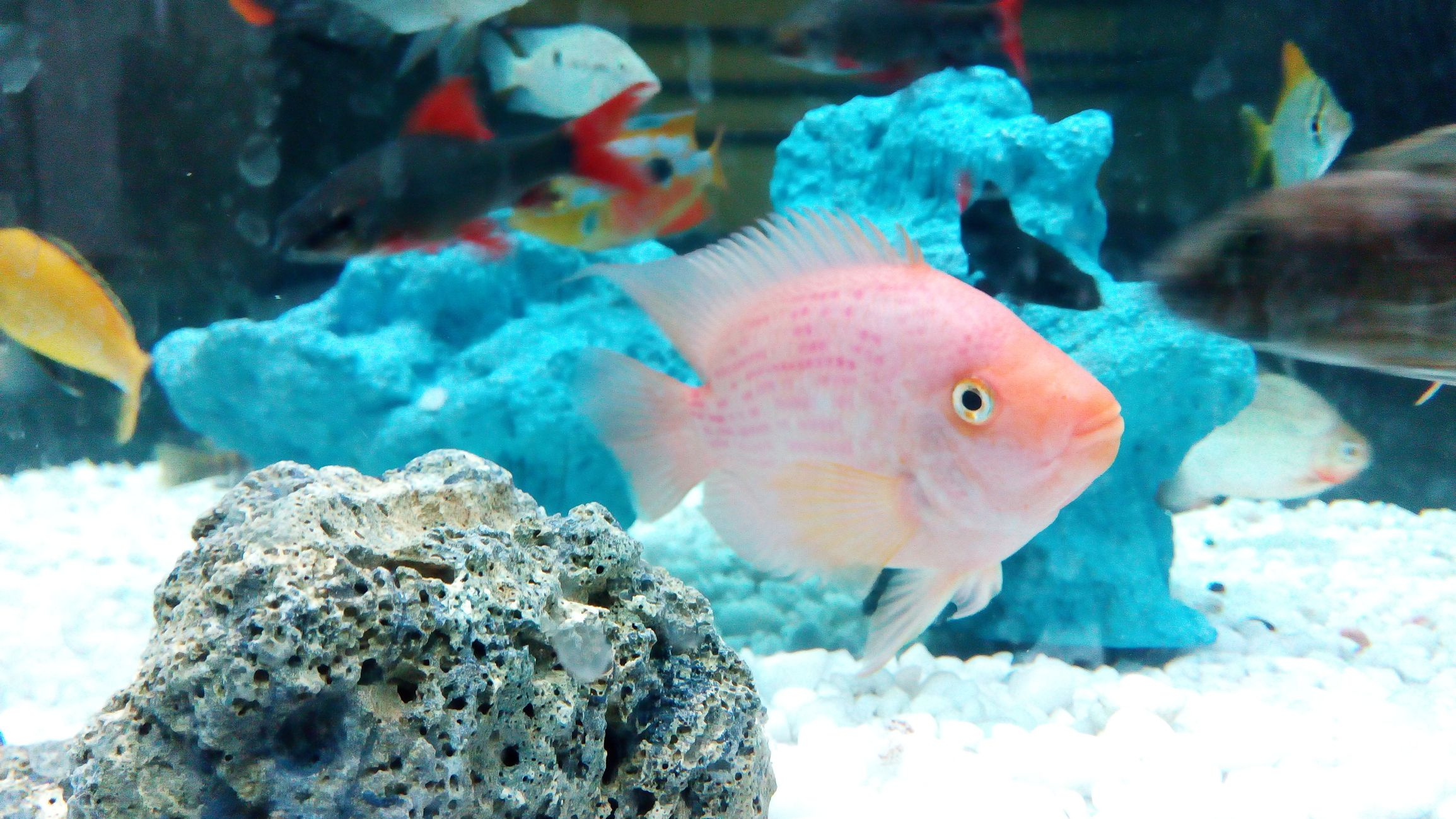 Types Of Cold Water Fish Pets At Home Fishtankfacts Com