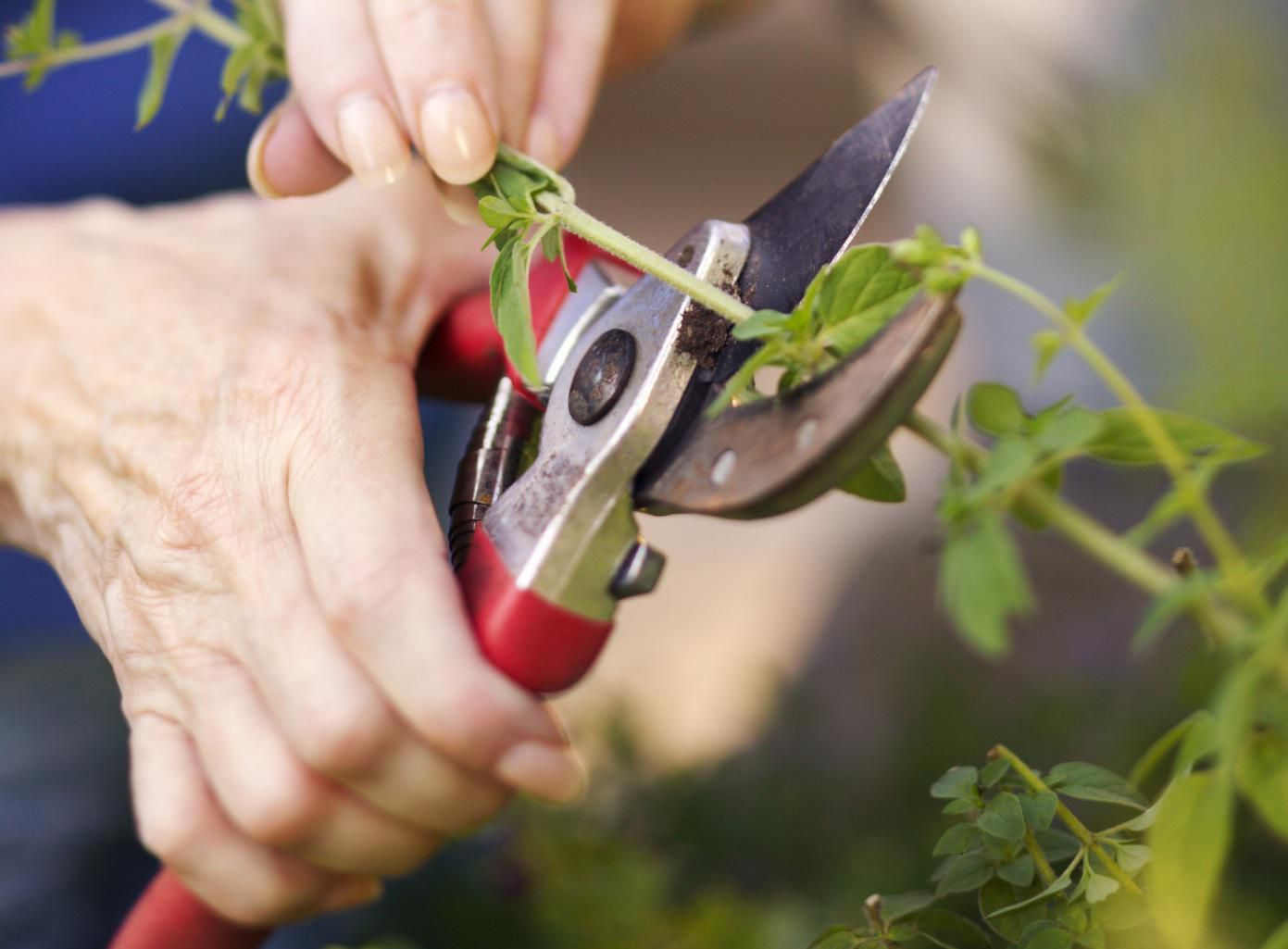 The garden tool review gardening tool reviews from a professional - How To Select Garden Hand Pruners Styles Cost Comfort Gardening Tips