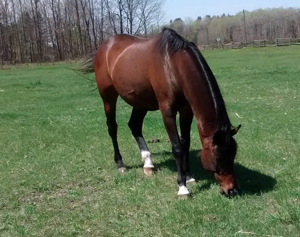 Single Horse Grazing in a Field