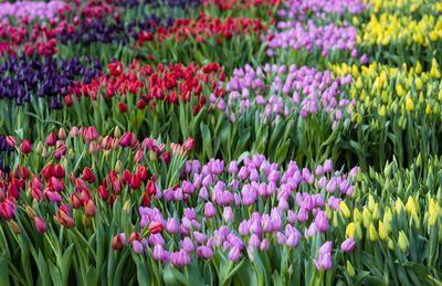 Plantas resistentes para climas c lidos for Plantas decorativas resistentes