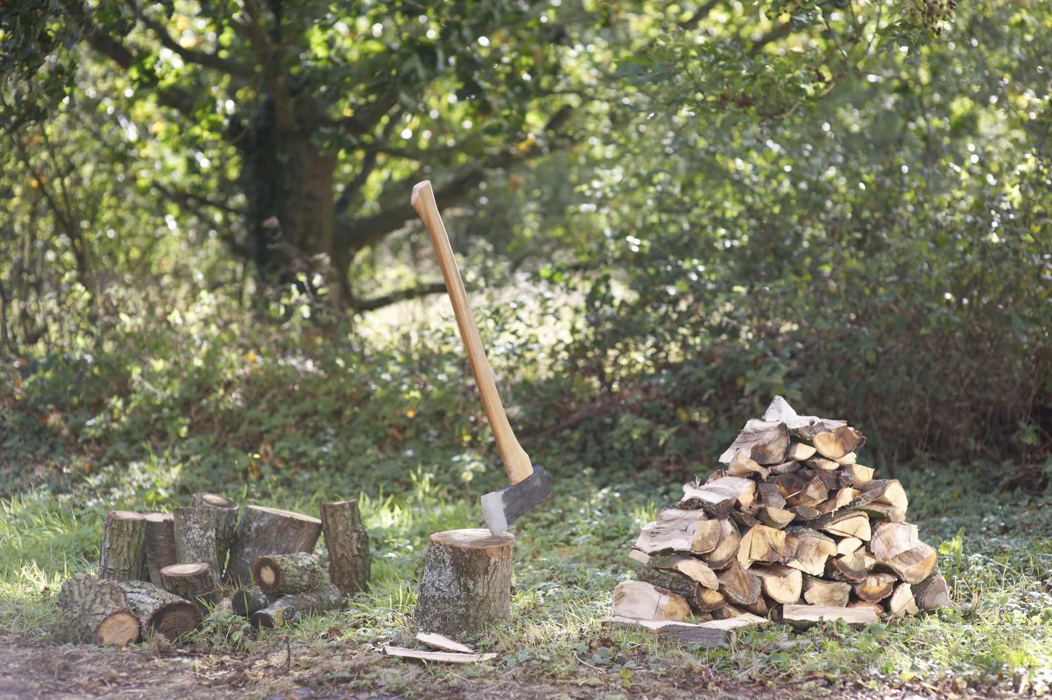 how to find the best firewood for burning