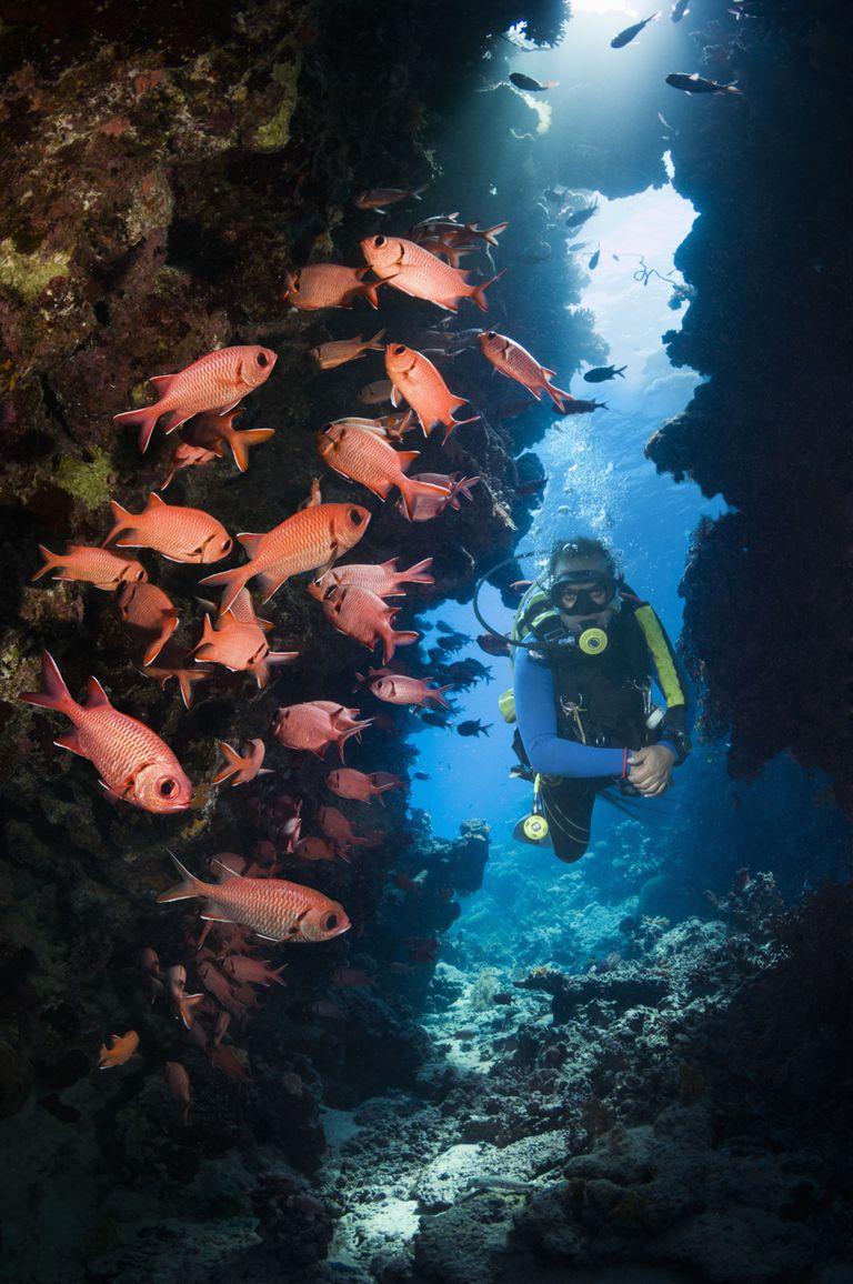 Scuba Diver in a Coral Canyon with Red Fish Vertical