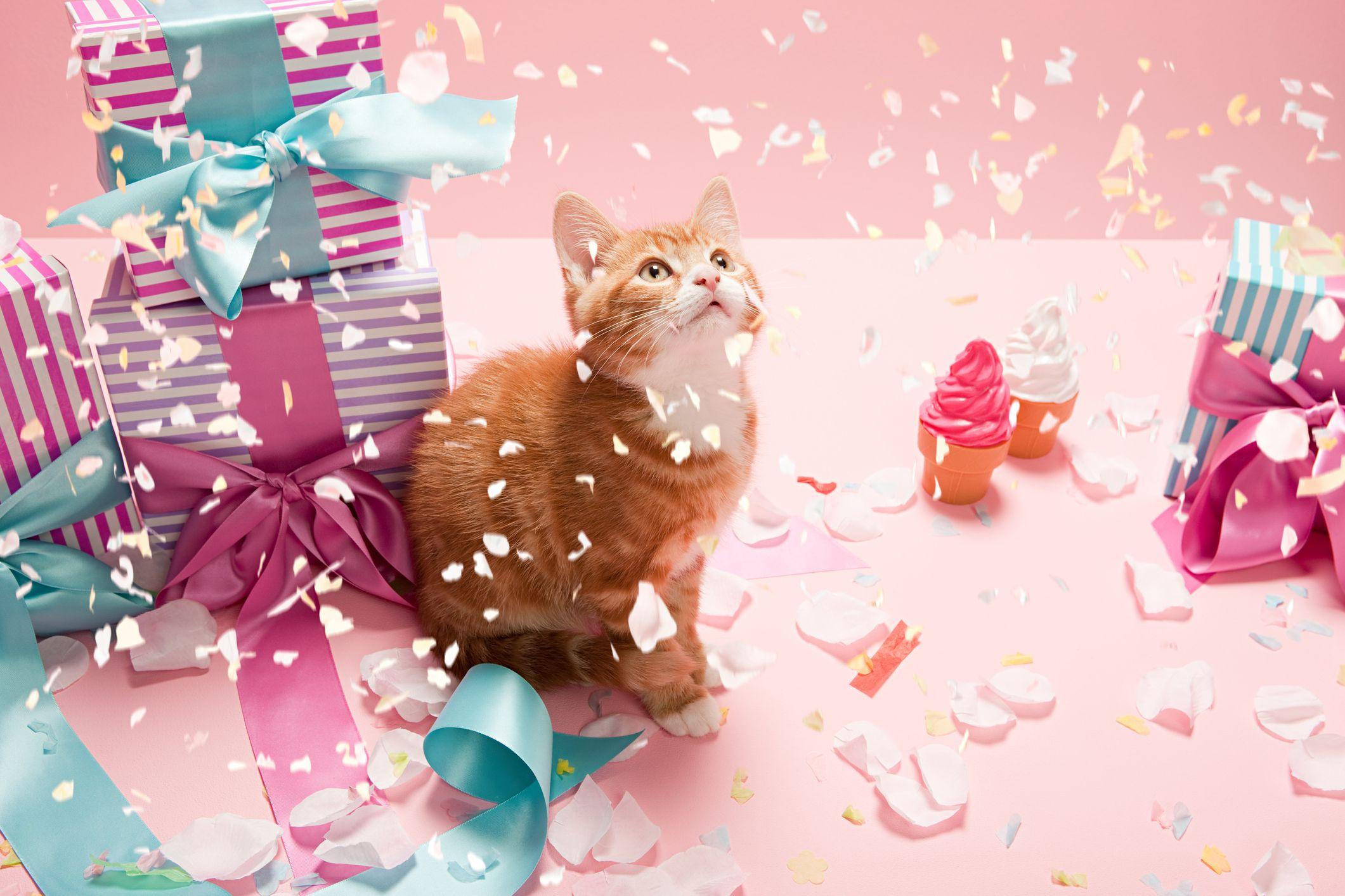 Top 8 Ways To Celebrate Your Cat S Birthday