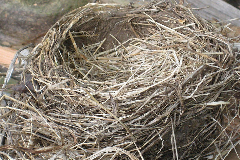 Old Nest