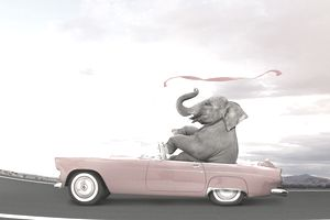 Heavy elephant driving pink convertible car