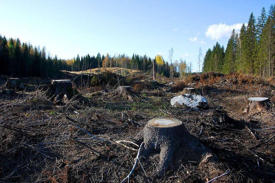 Clearcutting Habitat Loss