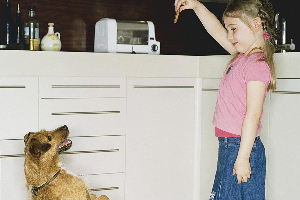 Dog begging for biscuit held by girl (4-6), side view