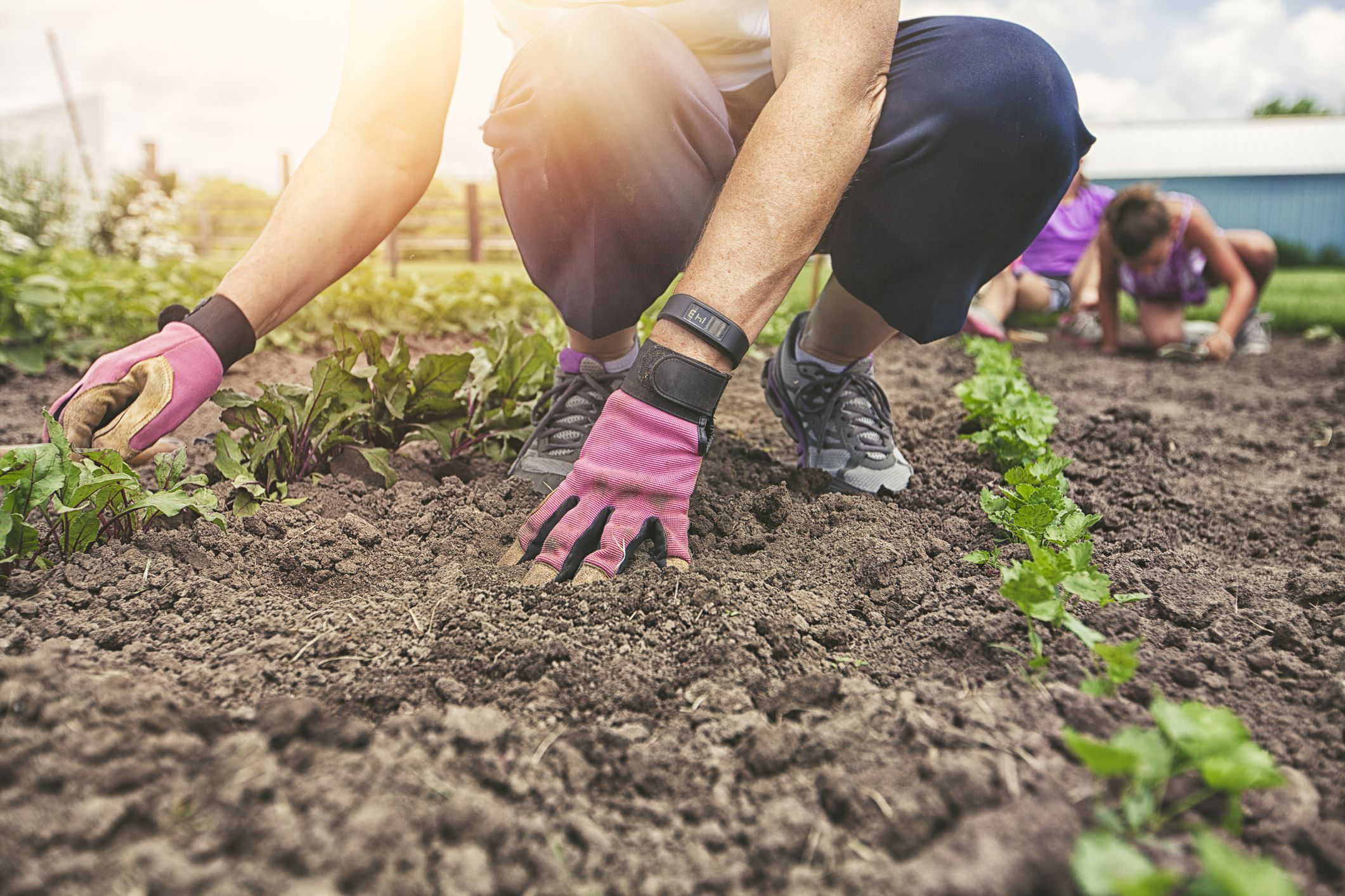 what are garden soil amendments