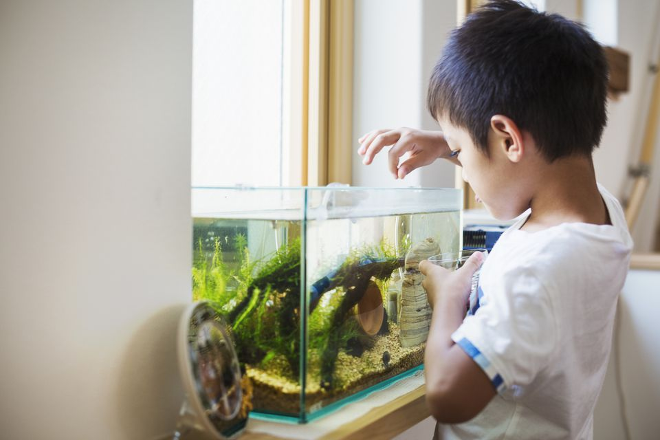 How often should i feed my saltwater aquarium fish for How often to feed fish