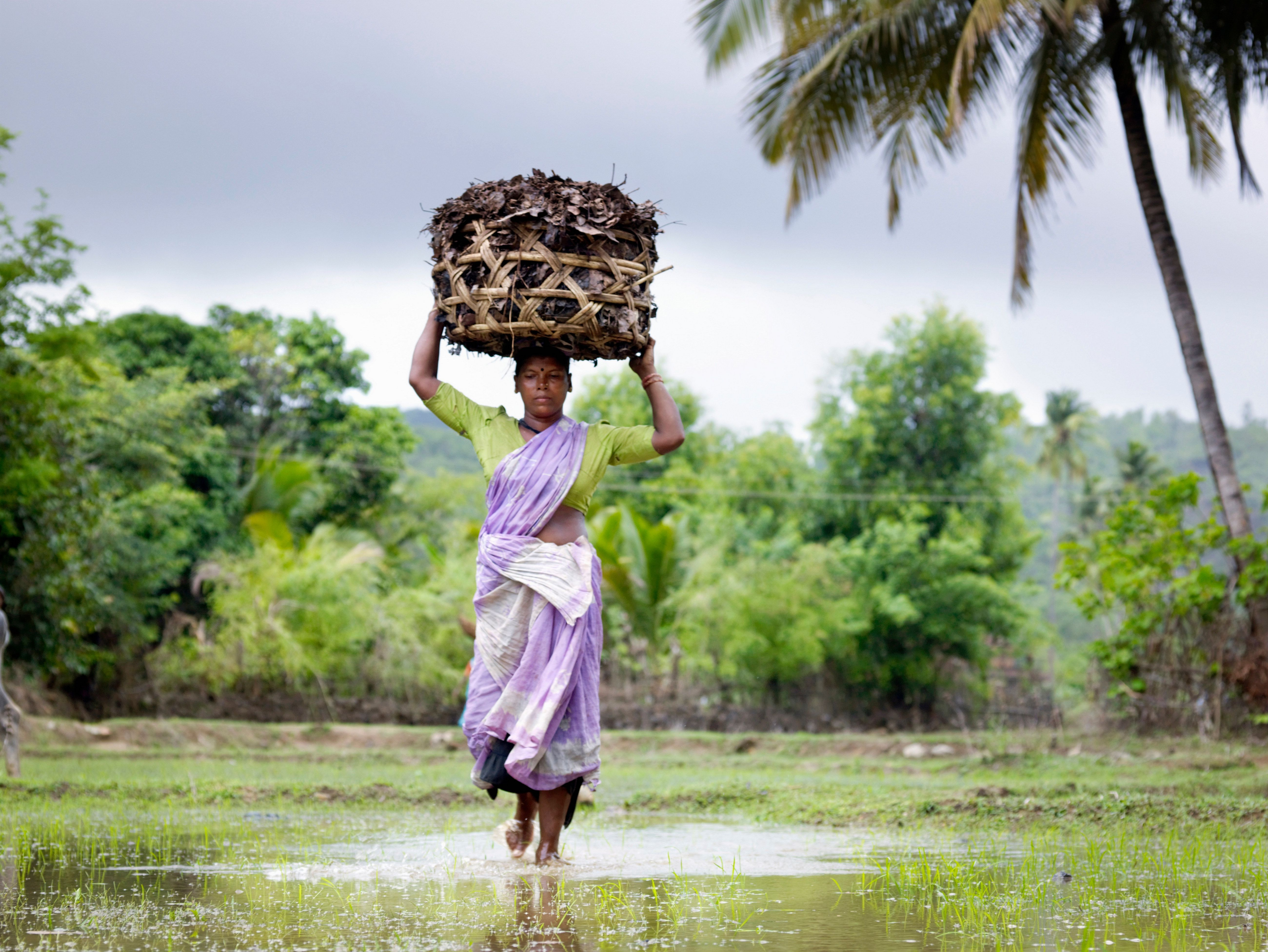 monsoon in india At least 324 people have been killed in flooding in the southern indian state of kerala in what local officials say is the worst flooding in 100 years india's monsoon season started in june, but.