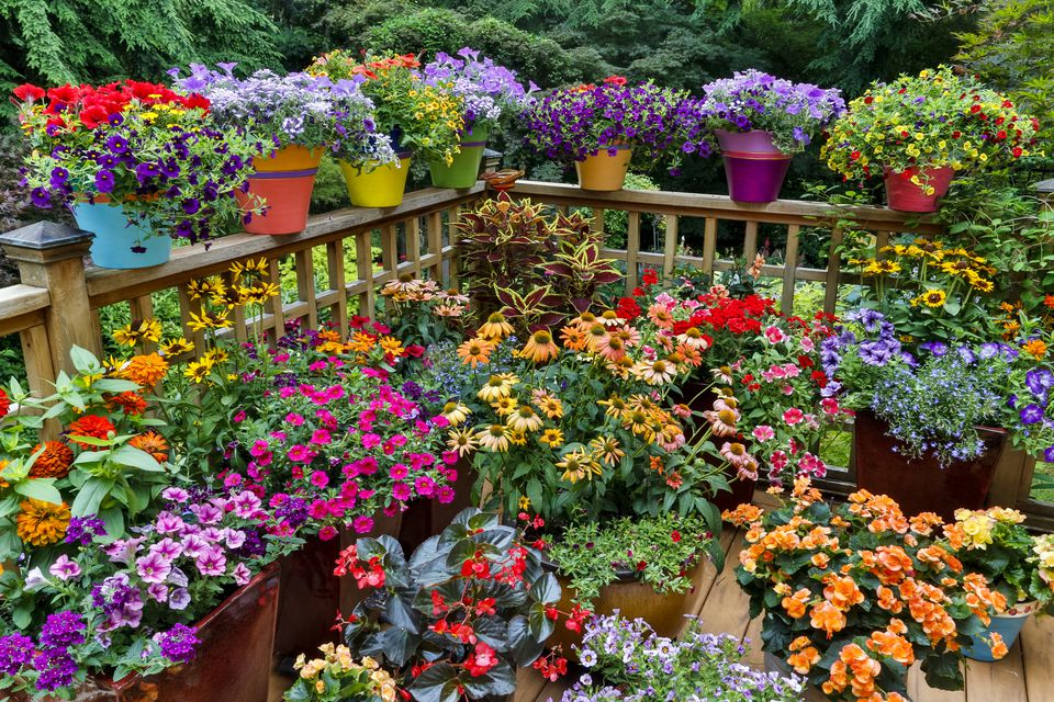 12 ideas for flowering container gardens - Flower Garden Ideas In Pots
