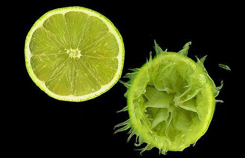 Persian Lime - Citrus